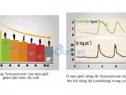 Thông tin Testosterone & Luteinizing là gì?